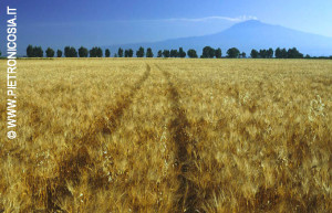 Campo di grano alla Piana di Catania; sullo sfondo l'Etna (© Foto Pietro Nicosia)